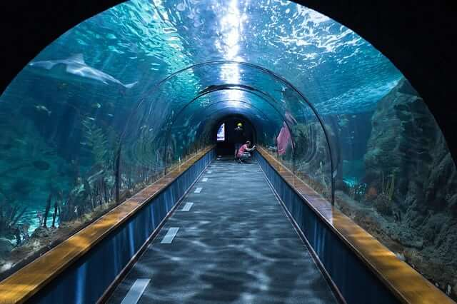 Ripleys Aquarium Gatlingburg