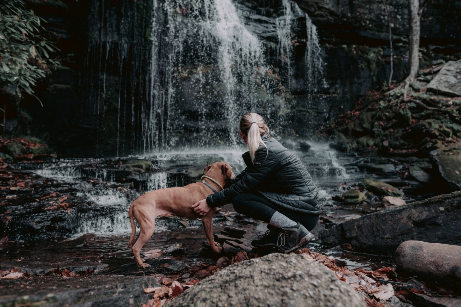 Hiking with a pitbull dog