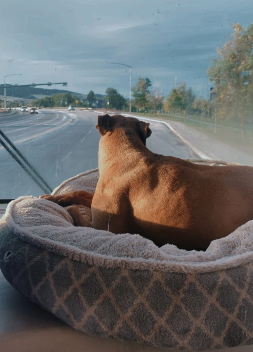 best dog beds for dogs