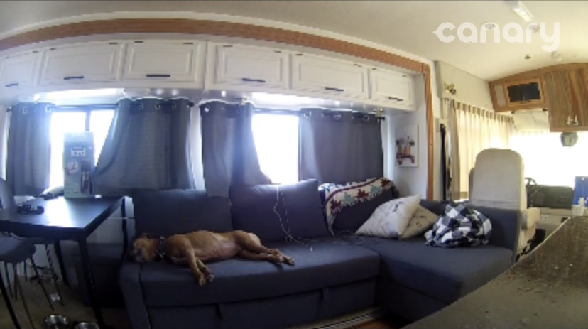Security camera for dogs